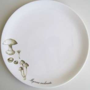Mycology plate